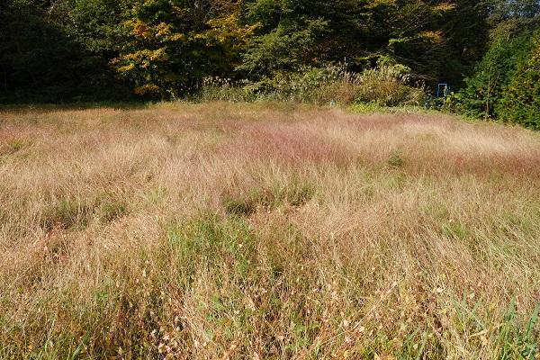 減反した田んぼの草ボーボーの状況写真