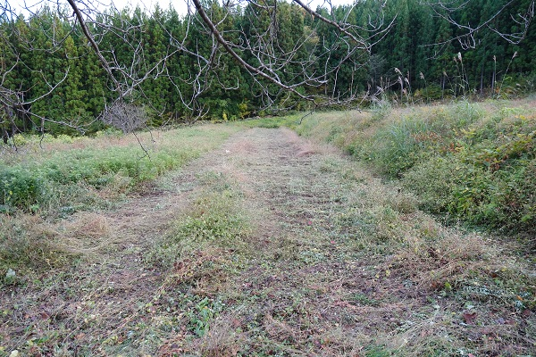 減反の草を刈った後の写真