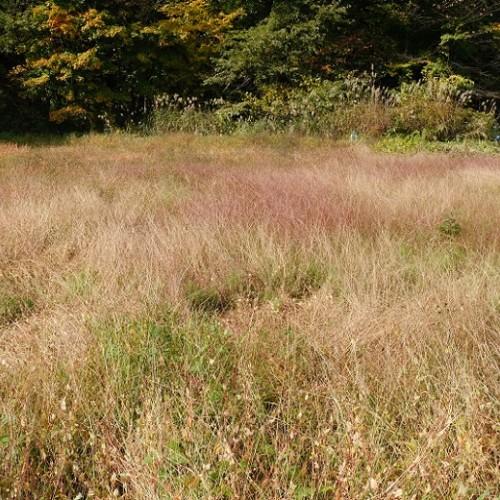 減反の草ぼうぼうの田んぼの写真