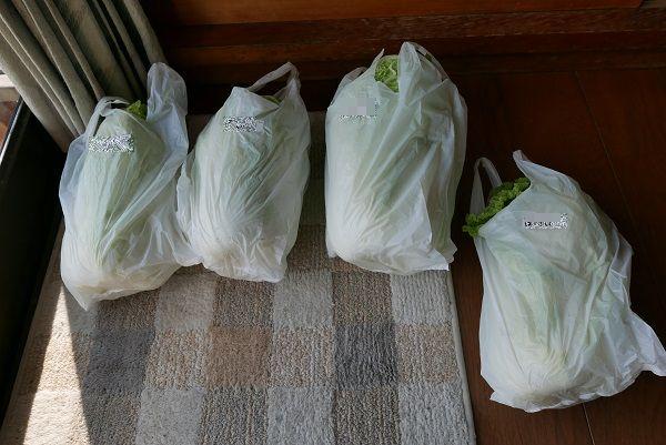 産直に置く白菜の写真