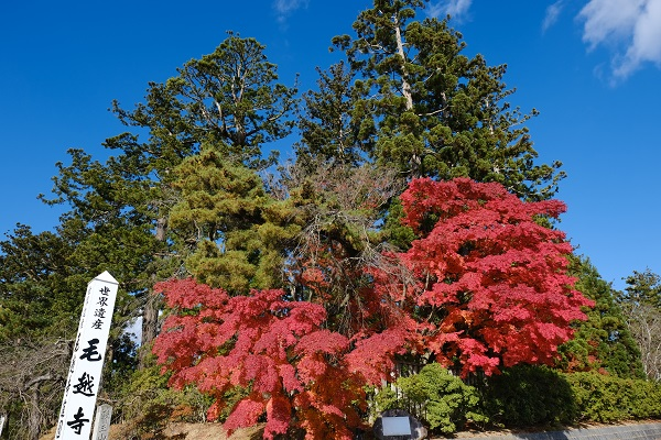 毛越寺の正門付近の色鮮やかな紅葉