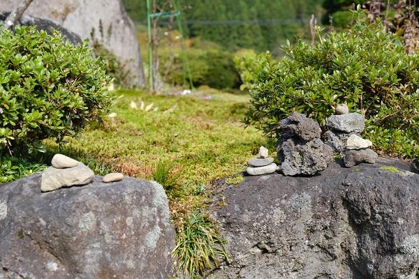 岩の間に自制したイワヒバ