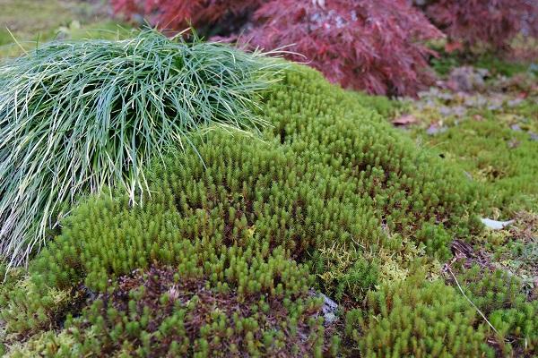 杉苔と草花の並んでる写真