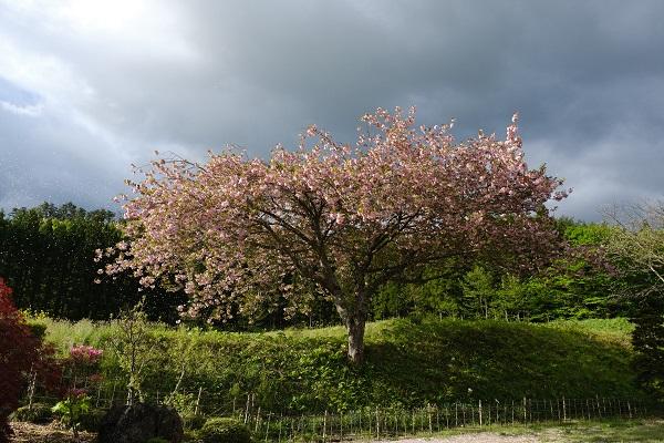 山桜も咲いてる満開の風景
