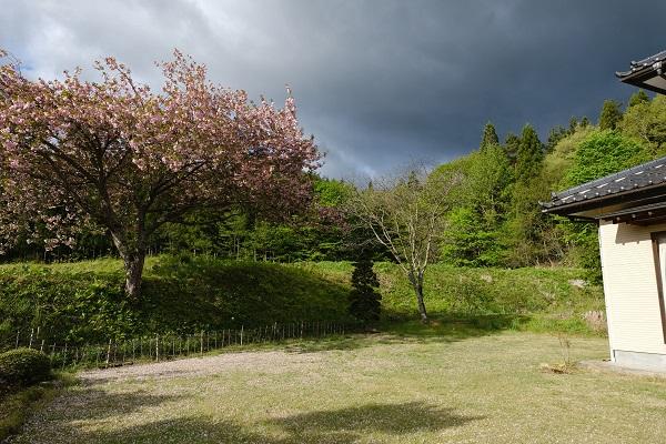 桜と芝のある風景