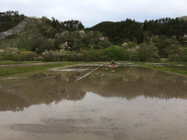 田んぼの代掻きの仕上げの風景写真