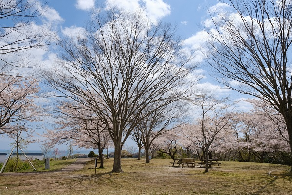 定年後の趣味写真 松島偉観の春の桜の写真