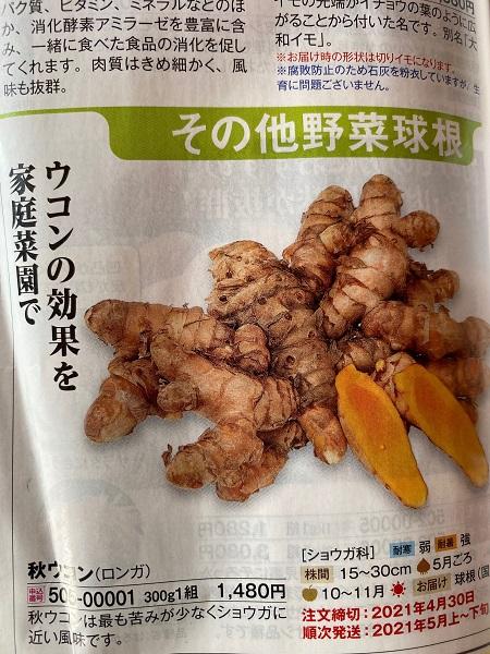 ウコンの種芋の写真