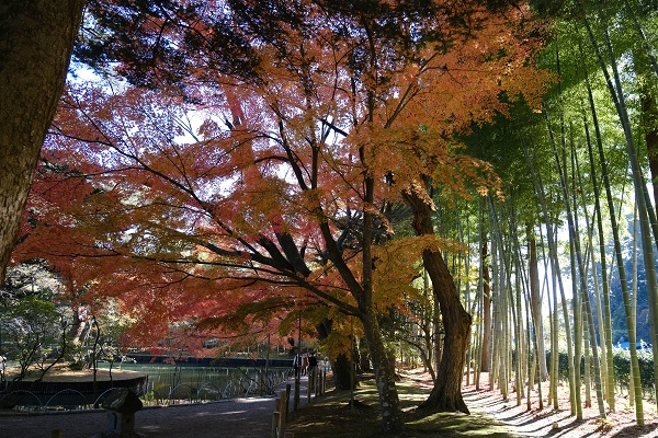 有備館の紅葉の景色の写真