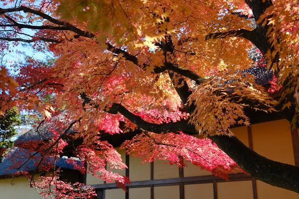 有備館の紅葉の写真