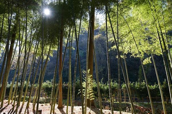 有備館の紅葉の竹林の景色の写真