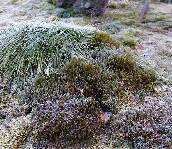 霜の降りた庭の写真