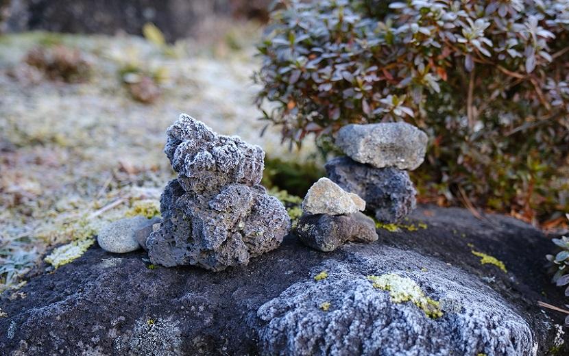 庭の霜の写真