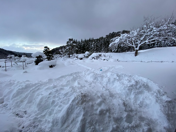 庭の雪の風景写真