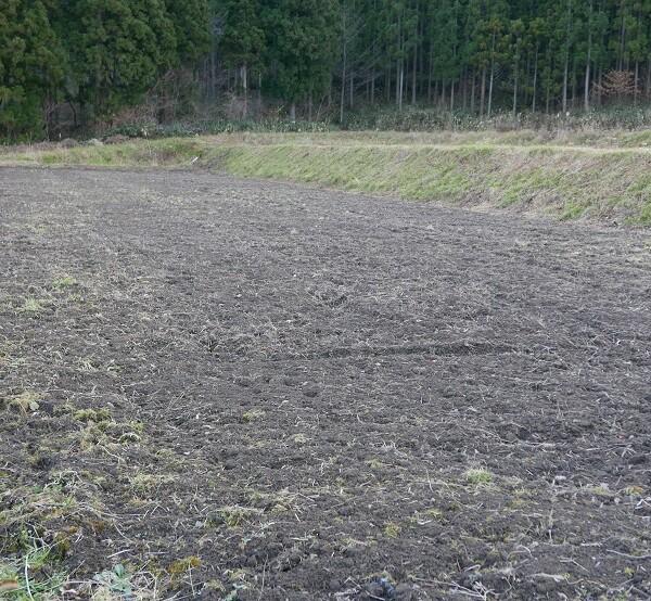 減反の田んぼの畑の写真